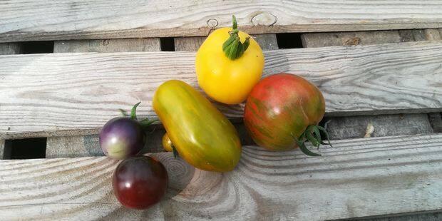 C'est la pleine saison des tomates: on sait où manger les meilleures - La DH