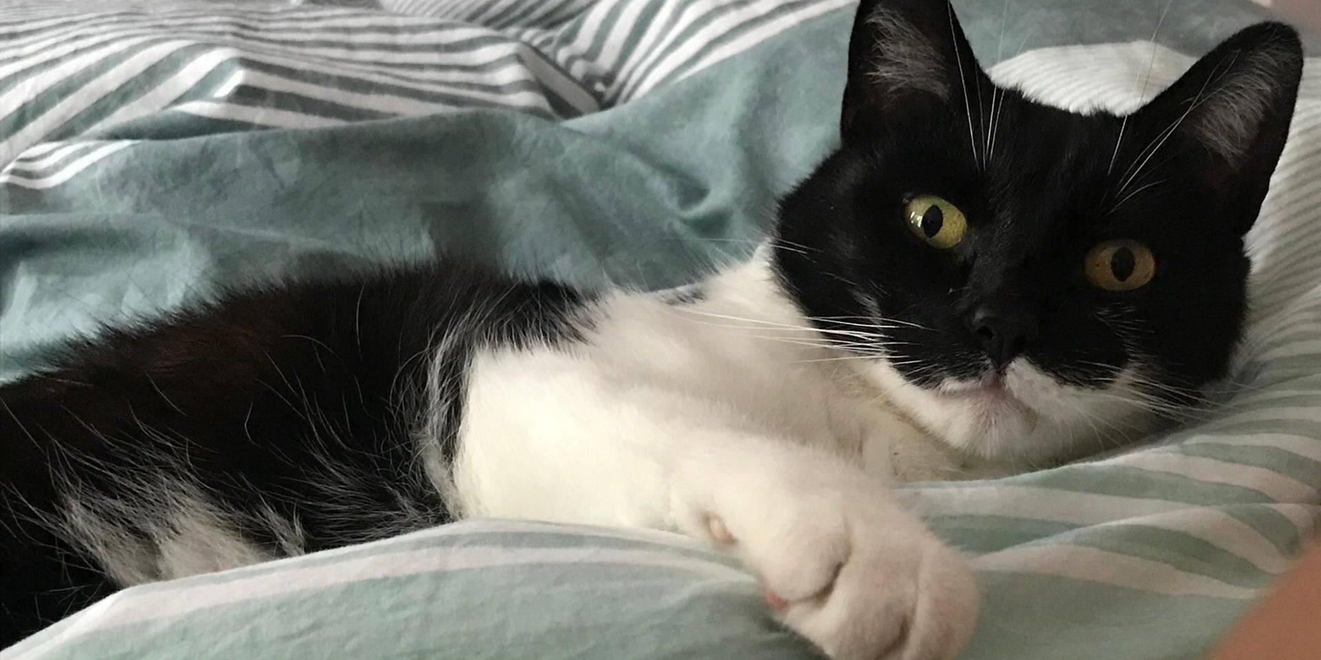 """Une facture de 800 euros pour soigner le chat de Véronique: """"Ils ont pris Fripon en otage aussi longtemps que je ne payais pas !"""""""