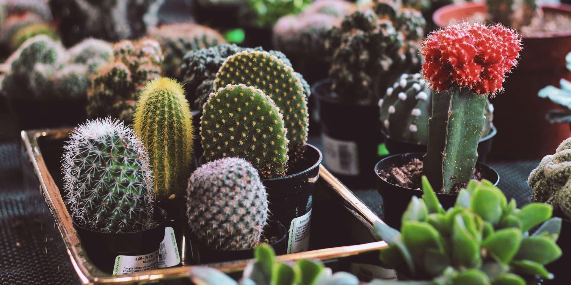 Comment le cactus est devenu la plante-déco dont tout le monde est accro