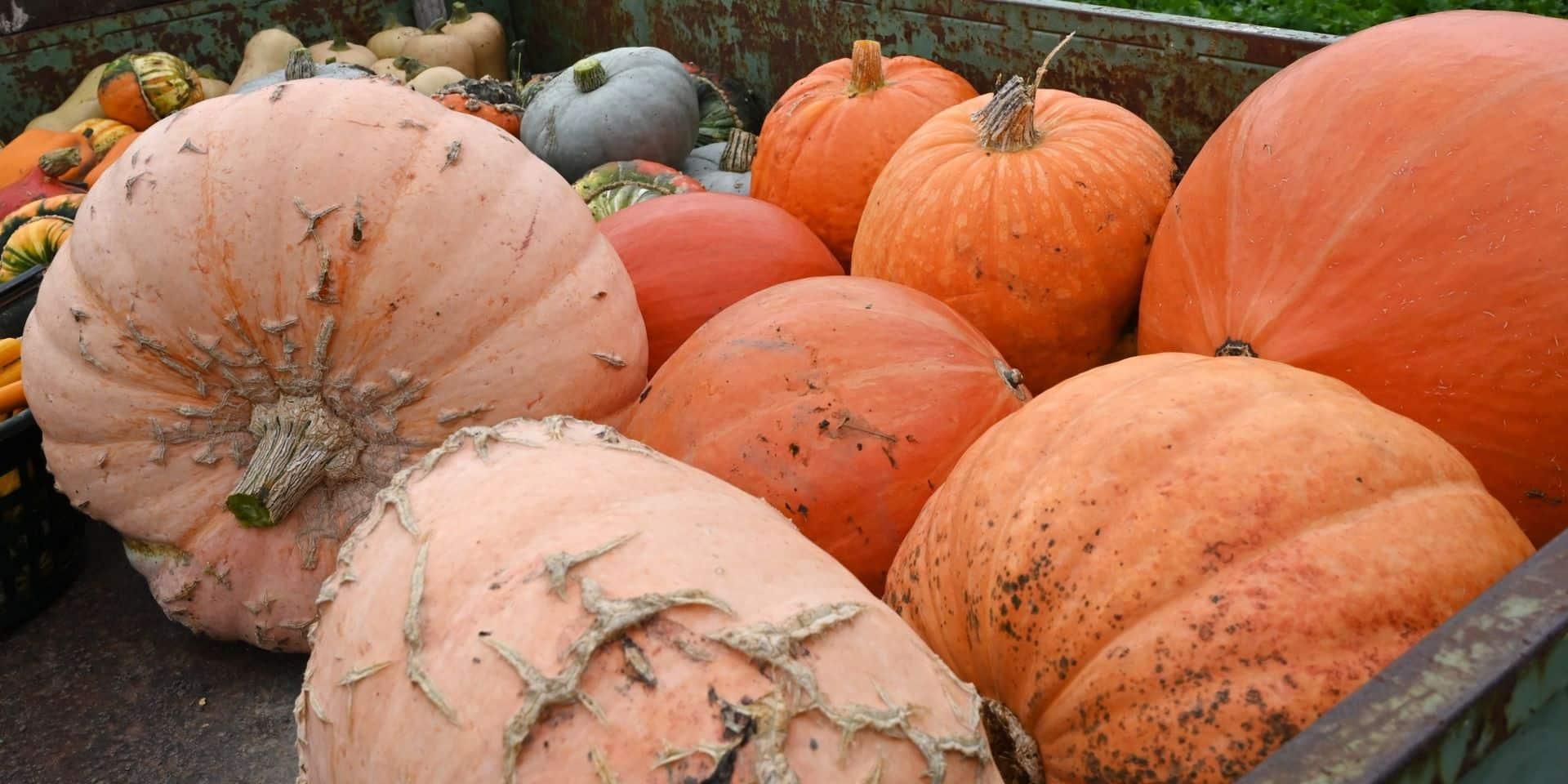 Jurbise: un label pour valoriser les artisans qui travaillent les produits locaux et de saison
