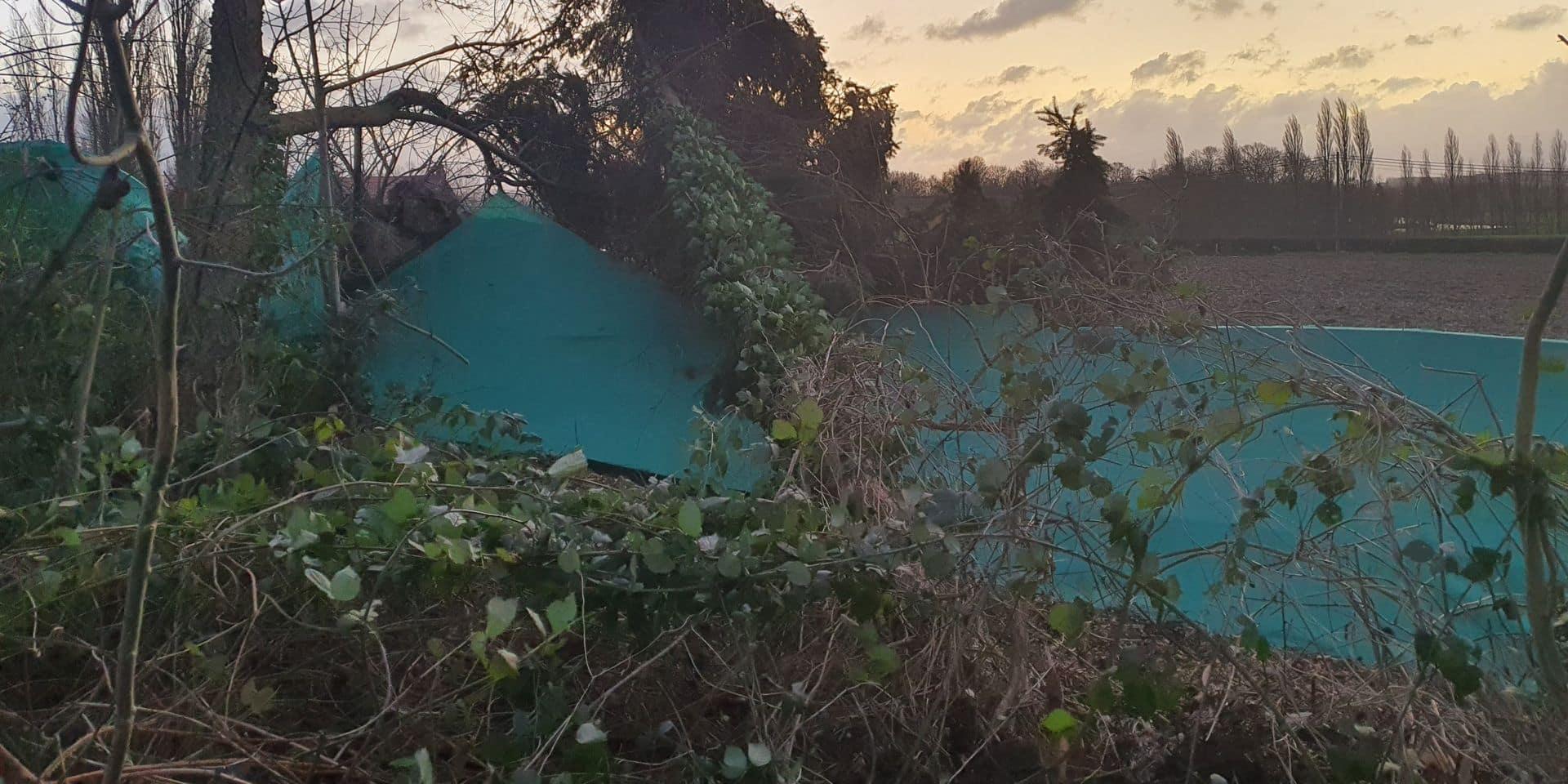 Feluy: coup dur pour l'association Les Amis des Animaux, victime de la tempête Ciara