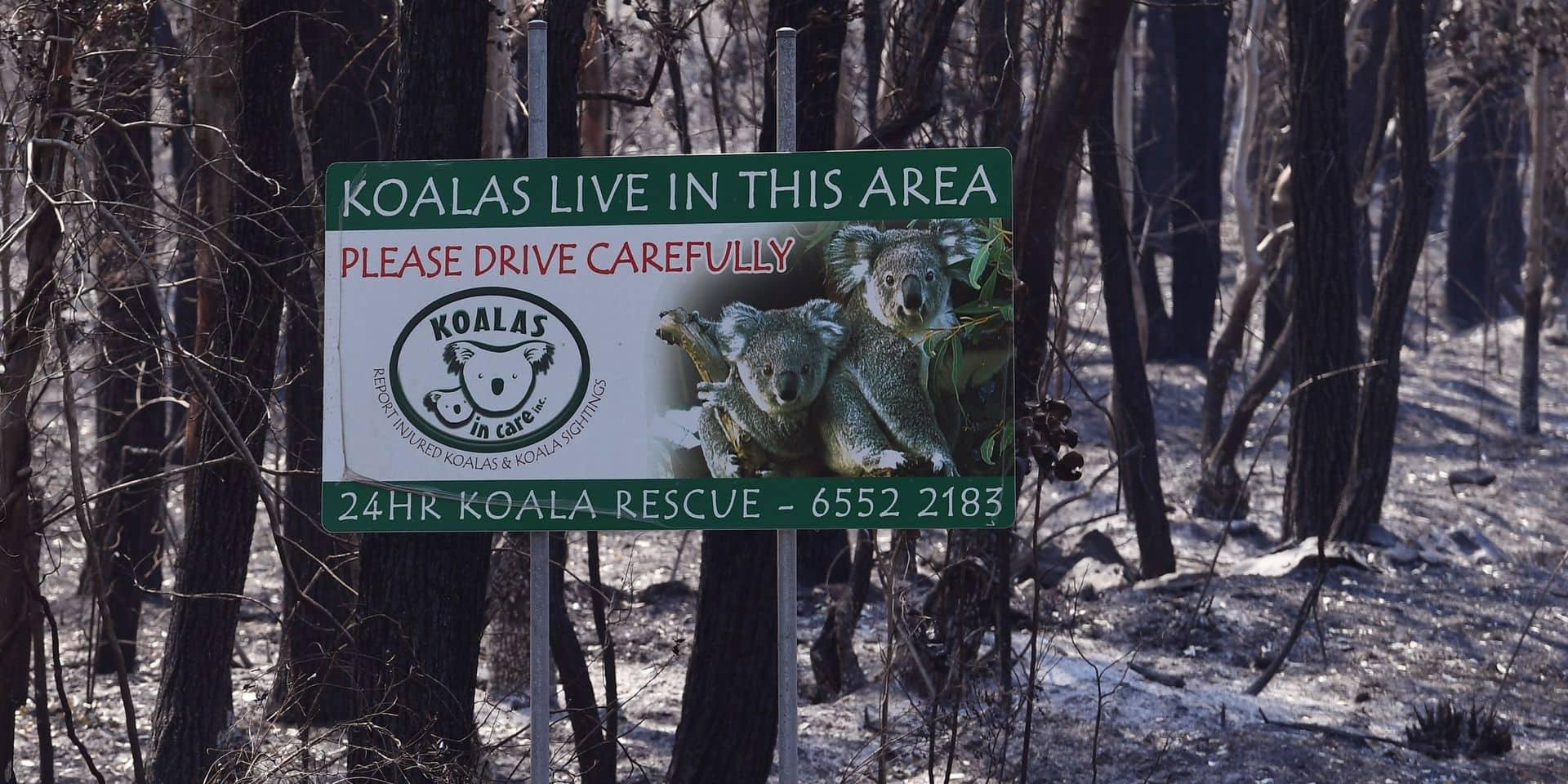 Feux de forêt en Australie : un koala assoiffé réclame de l'eau à un groupe de cyclistes près d'Adelaide