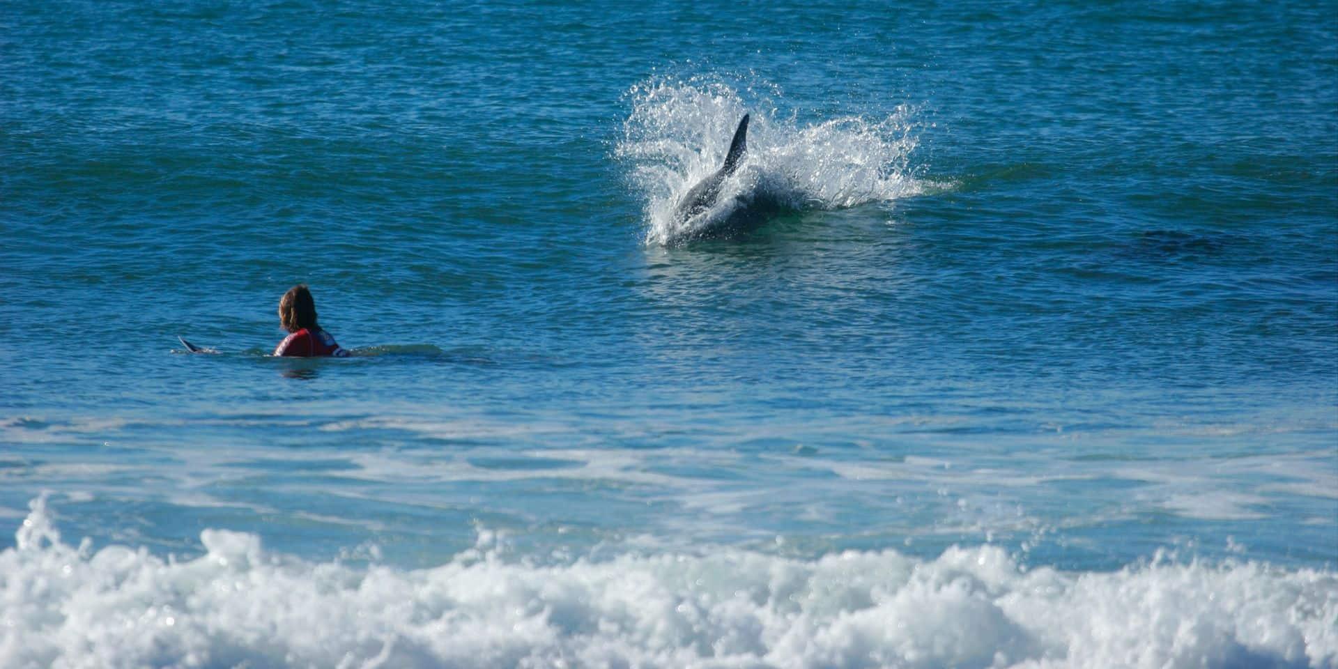 Un médecin surfeur dévoile comment sauver d'une morsure de requin