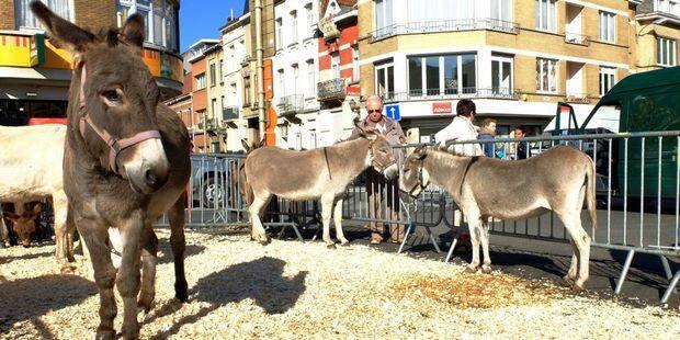 Jette: Week-end festif du marché annuel - La DH