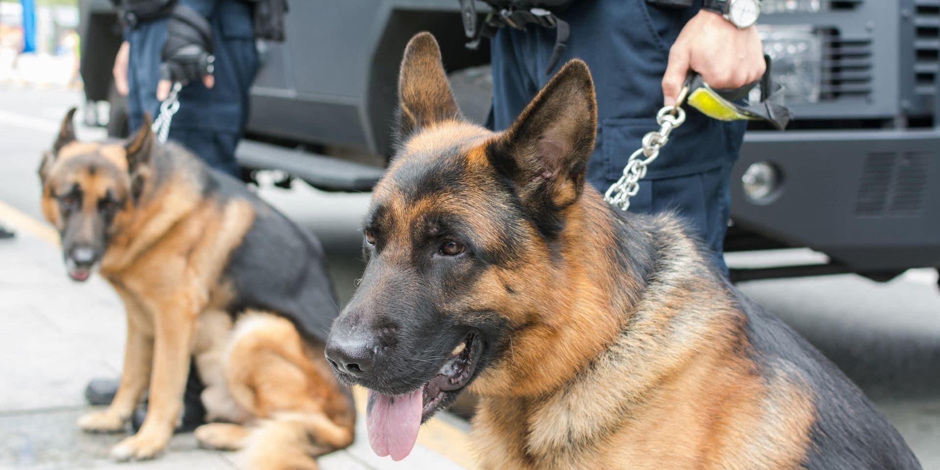 La police manque de chiens anti-drogues