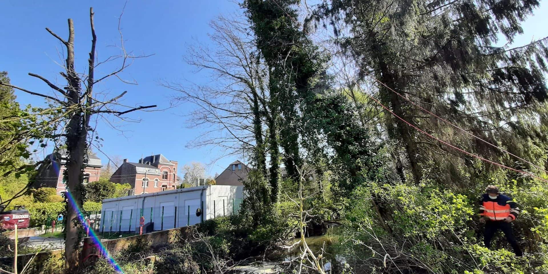 Abattage de deux peupliers qui menaçaient de s'effondrer sur l'école de Suzeril de Court-Saint-Étienne (PHOTOS)