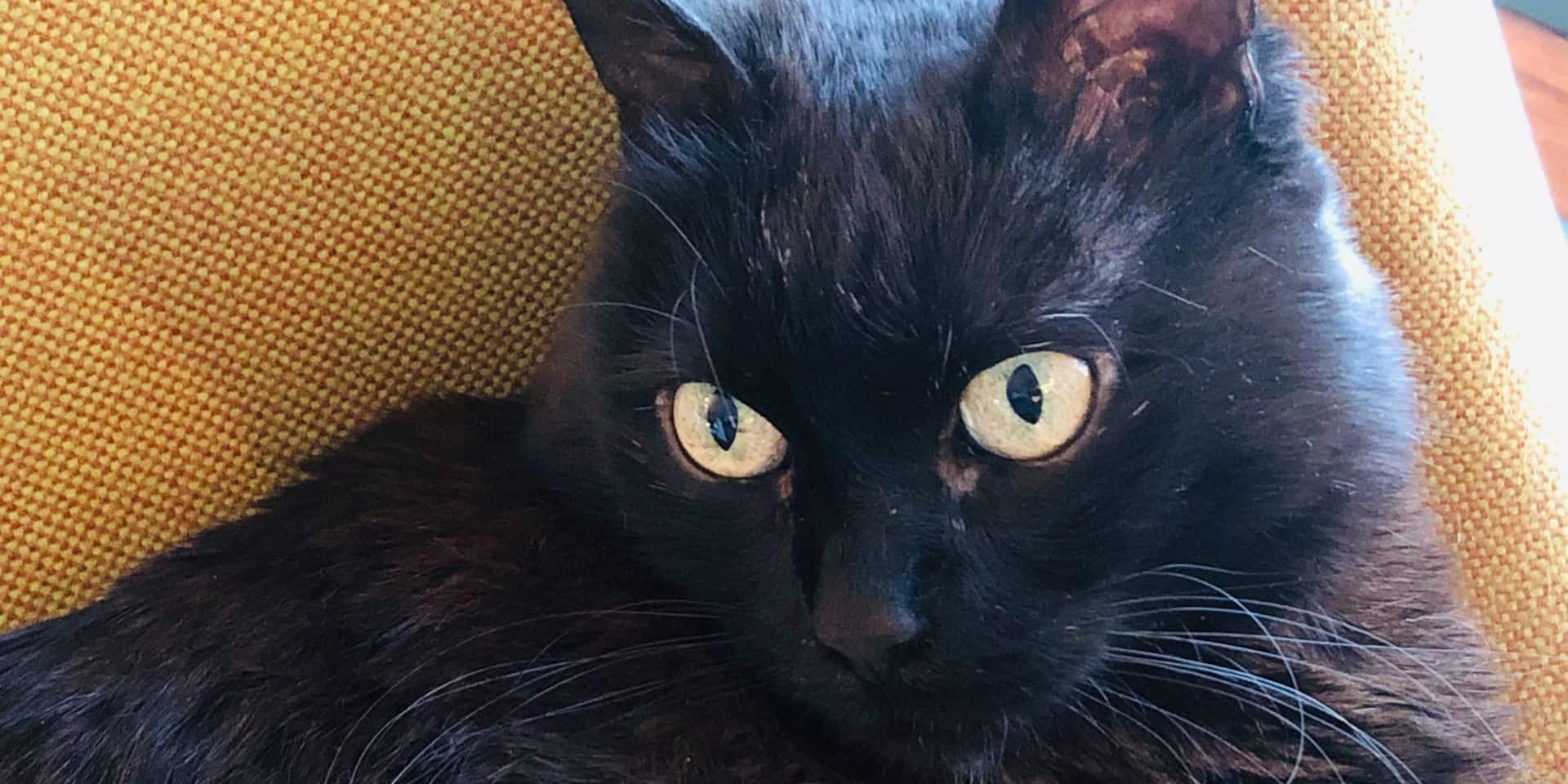 """Un vétérinaire inquiet après un cas de Covid-19 sur un chat: """"On nous demande déjà d'euthanasier les animaux !"""""""