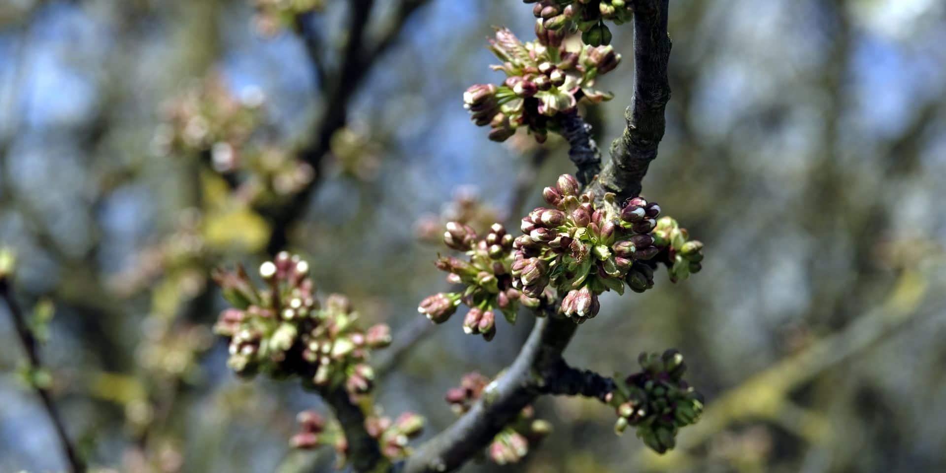 Dour: des arbres distribués gratuitement aux citoyens
