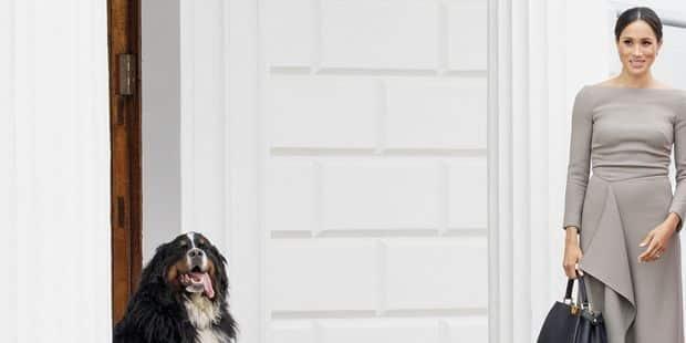 Meghan Markle et le prince Harry ont adopté un chien - La DH