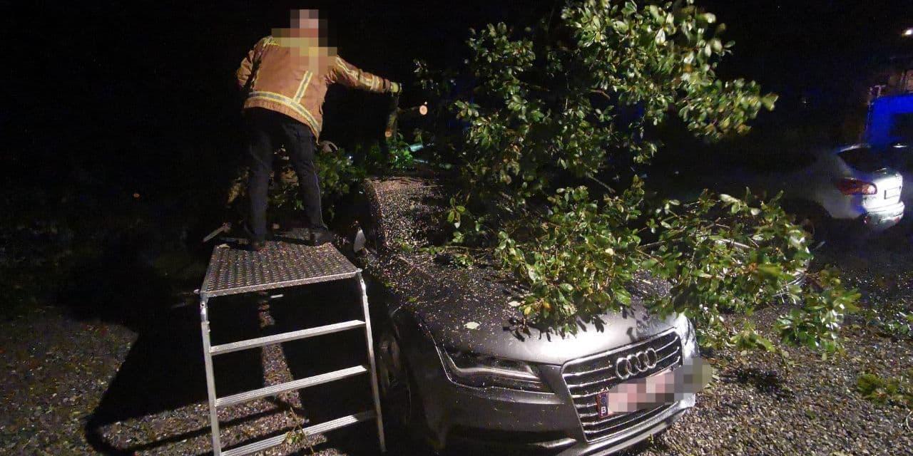 Fontaine-l'Evêque : un arbre s'abat sur une voiture