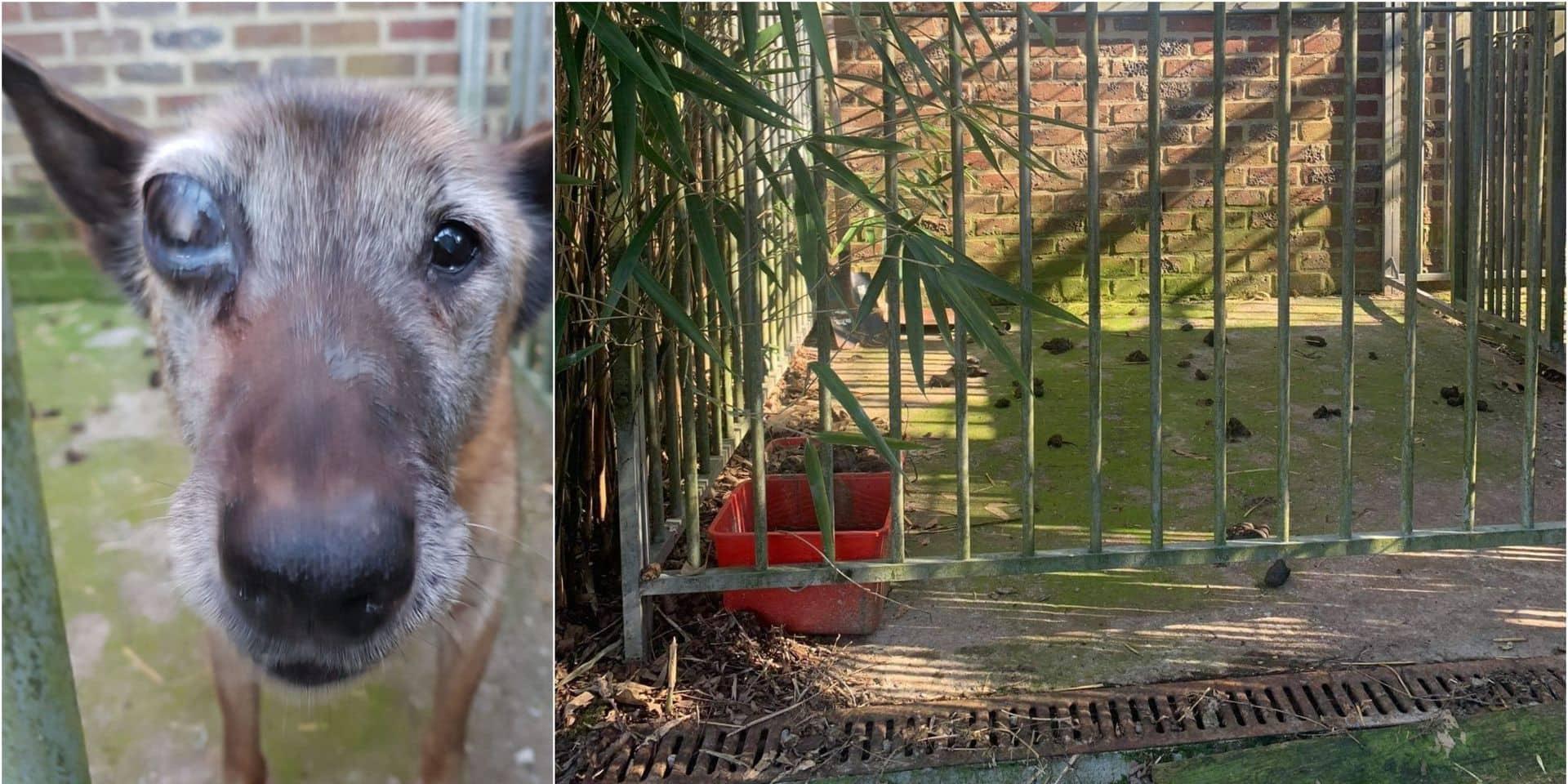 Une chienne vivait seule dans ses excréments à Wavre: elle a été récupérée par Sans Collier