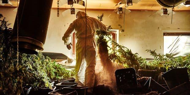 Il cultivait 1.400 plants de cannabis à Beauvechain - La DH