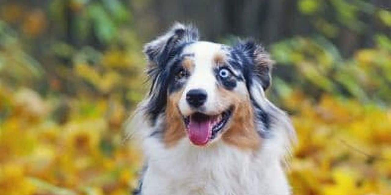 Blaton : le collège remet un avis favorable à Happy Dogs…sous conditions !