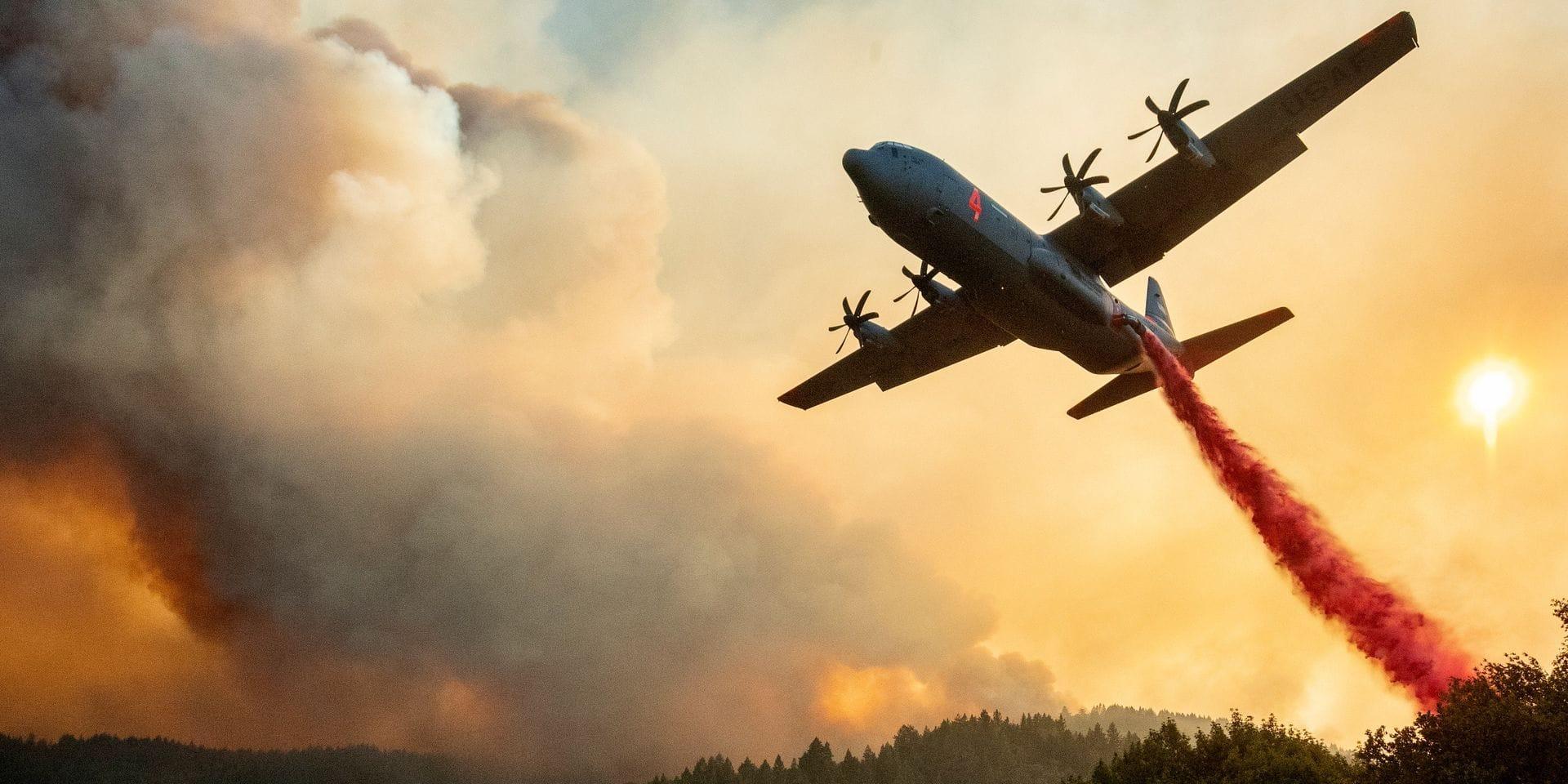 Le WWF craint des feux de forêts encore plus dévastateurs qu'en 2019