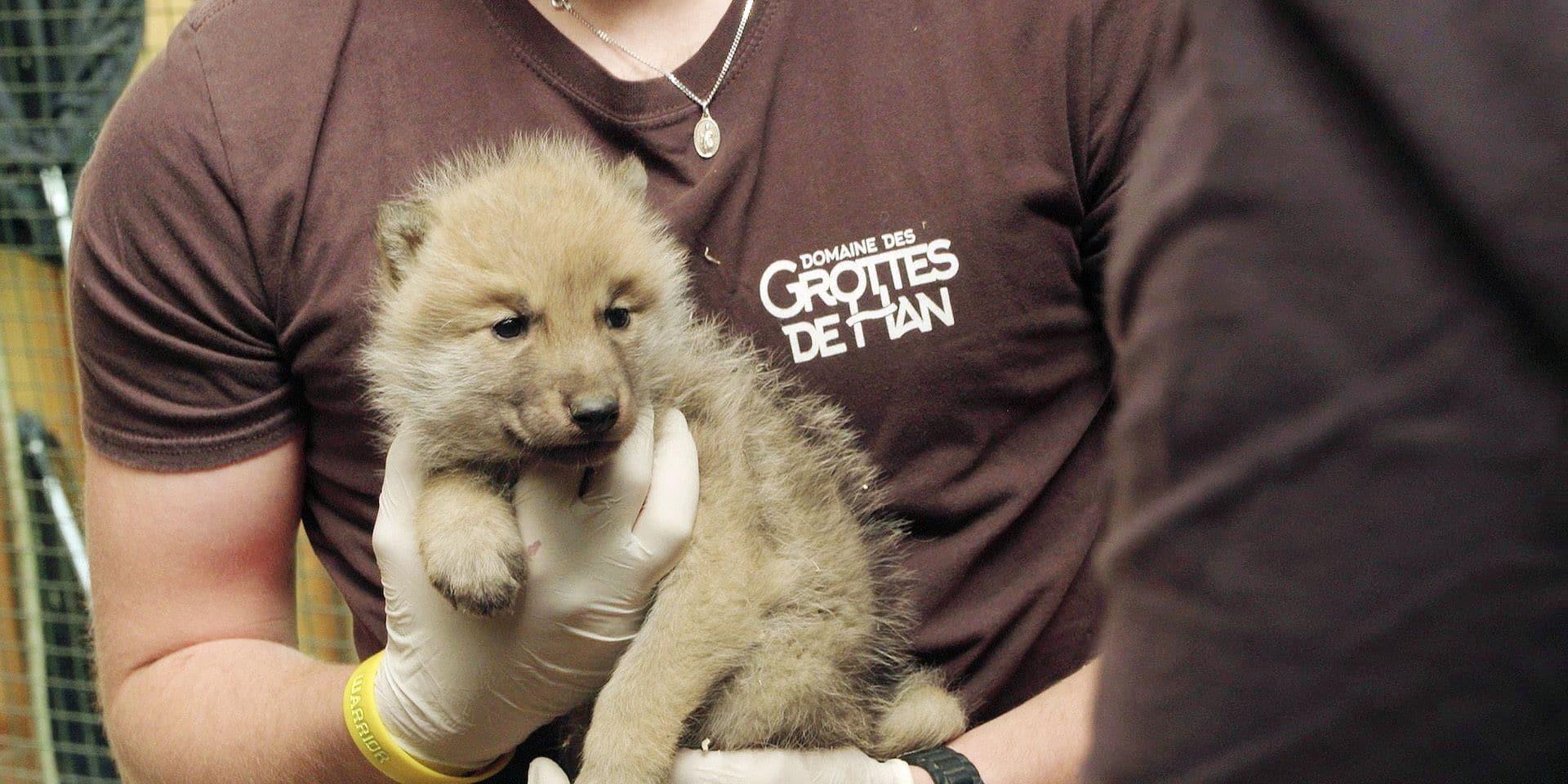H.A.N., Hommes Animaux Nature: une immersion au cœur du sauvetage d'animaux menacés, au parc animalier de Han-sur-Lesse