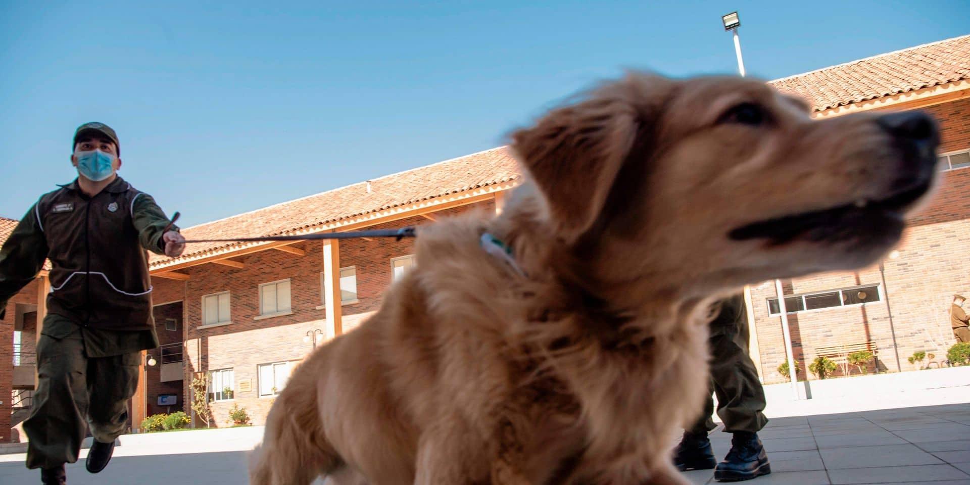"""La Défense songe à utiliser des chiens pour détecter le Covid: """"D'ici fin décembre, on pourrait avoir douze équipes opérationnelles"""""""