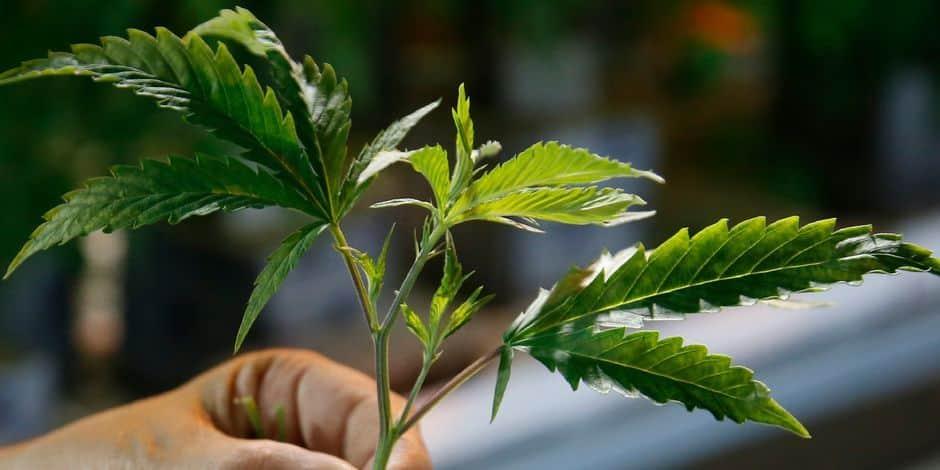 Klajdi, le jardinier d'une plantation de cannabis en échange d'un toit, écope d'un sursis simple