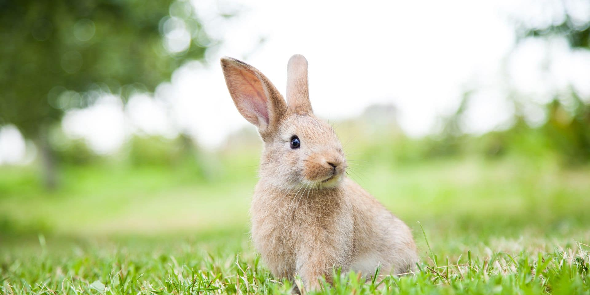 Bunny,Rabbit,On,The,Grass.,Close,Up.