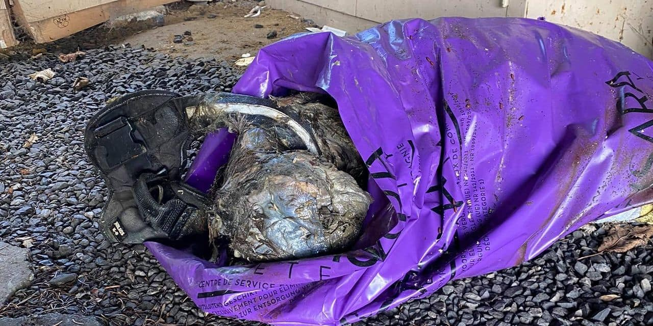 Péruwelz : un chien mort découvert dans un sac dans un garage !