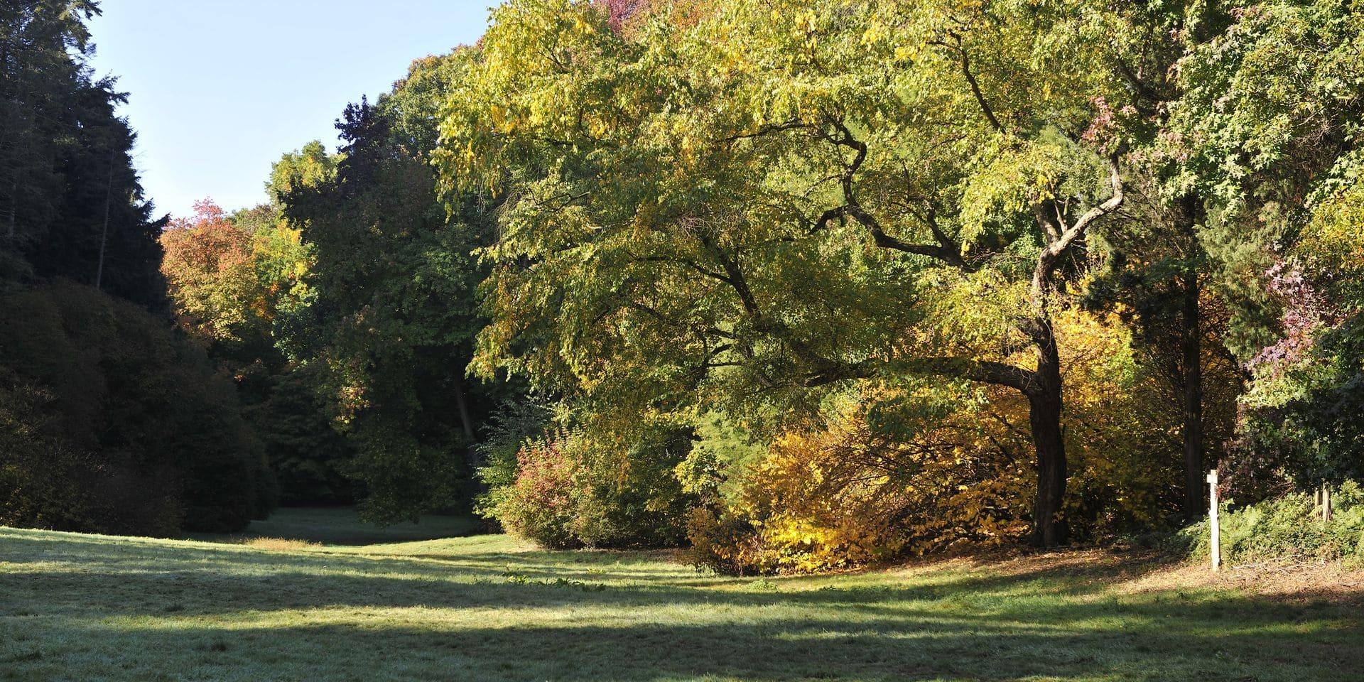 L'Arboretum de Tervuren, la perle cachée de la forêt de Soignes : un tour du monde en quelques promenades