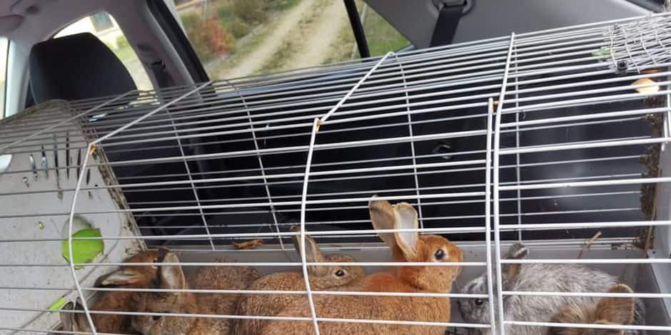 Cruauté envers les animaux : des lapins sauvés de la noyade à Sommethonne !