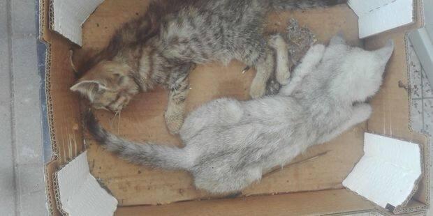Encore quatre chats empoisonnés à Châtelineau - La DH
