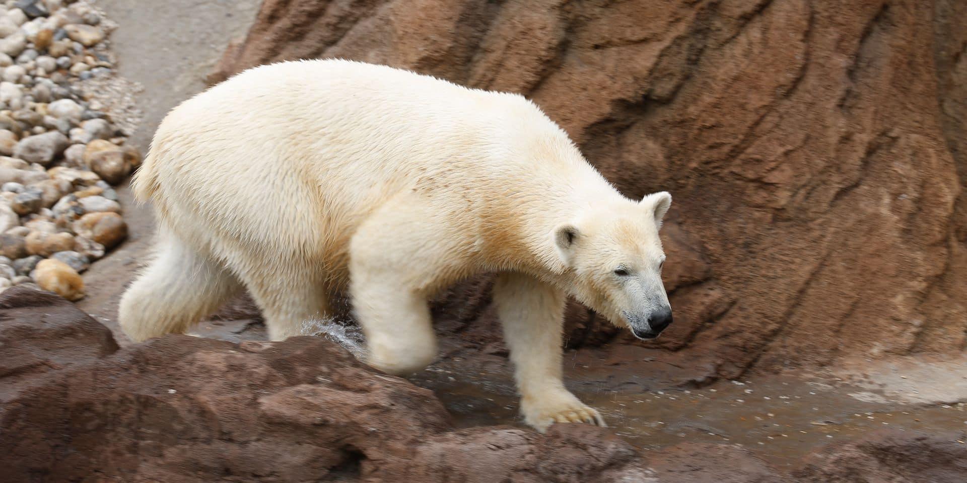 Pairi Daiza : moment exceptionnel à la Terre du froid