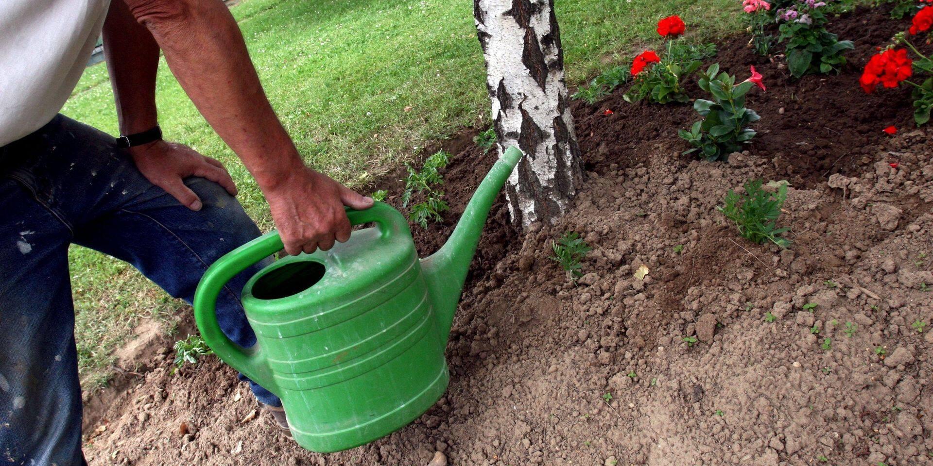 """À Ecaussinnes, on peut """"adopter un coin vert"""" pour faire pousser des plantes"""