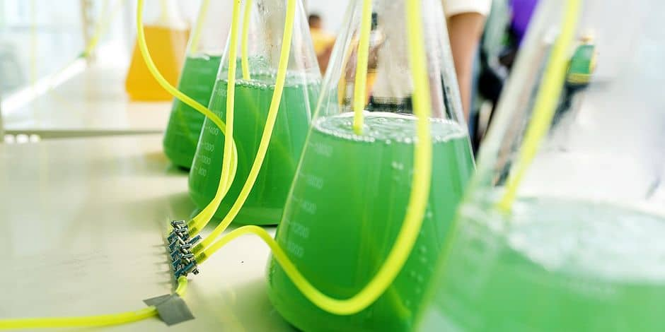 Mort programmée du diesel : et si le carburant aux algues était l'alternative ? - La DH