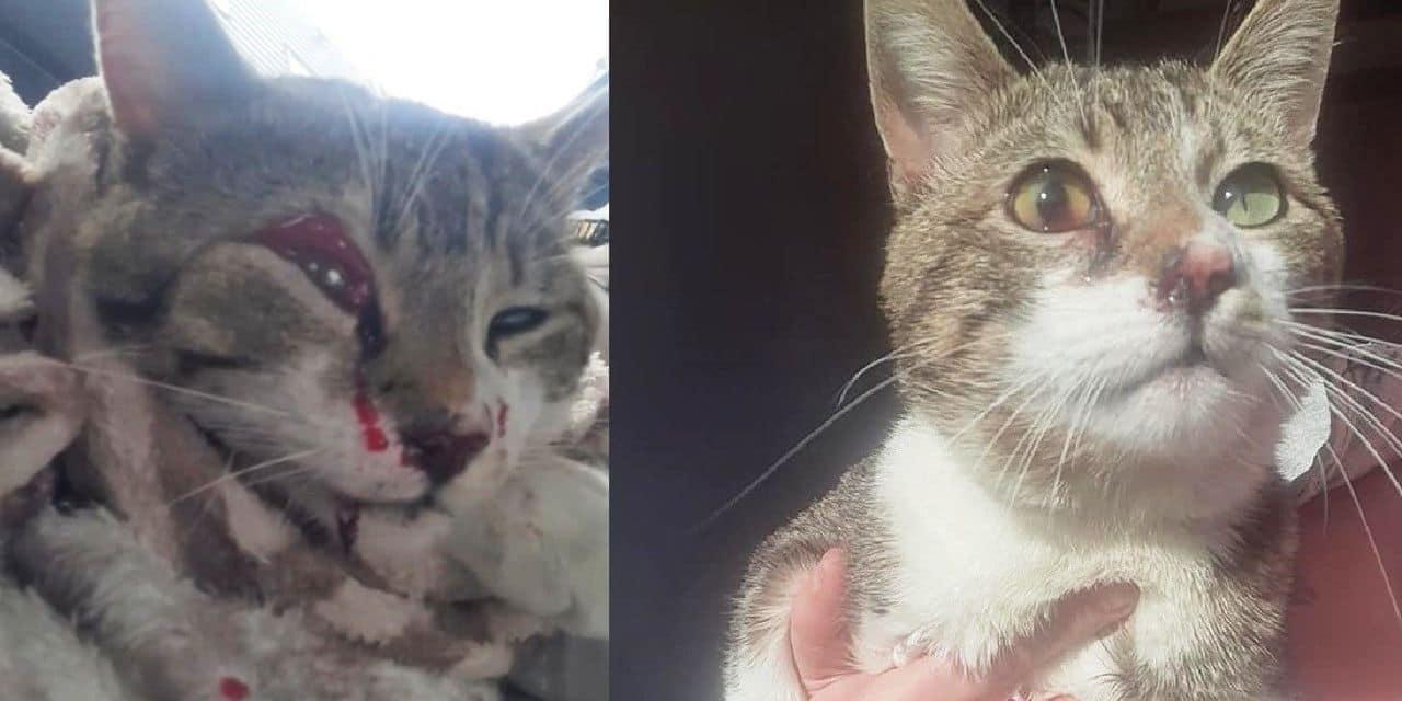 Beloeil : qui a tiré sur Mamahou, le chat de Priscilla ?