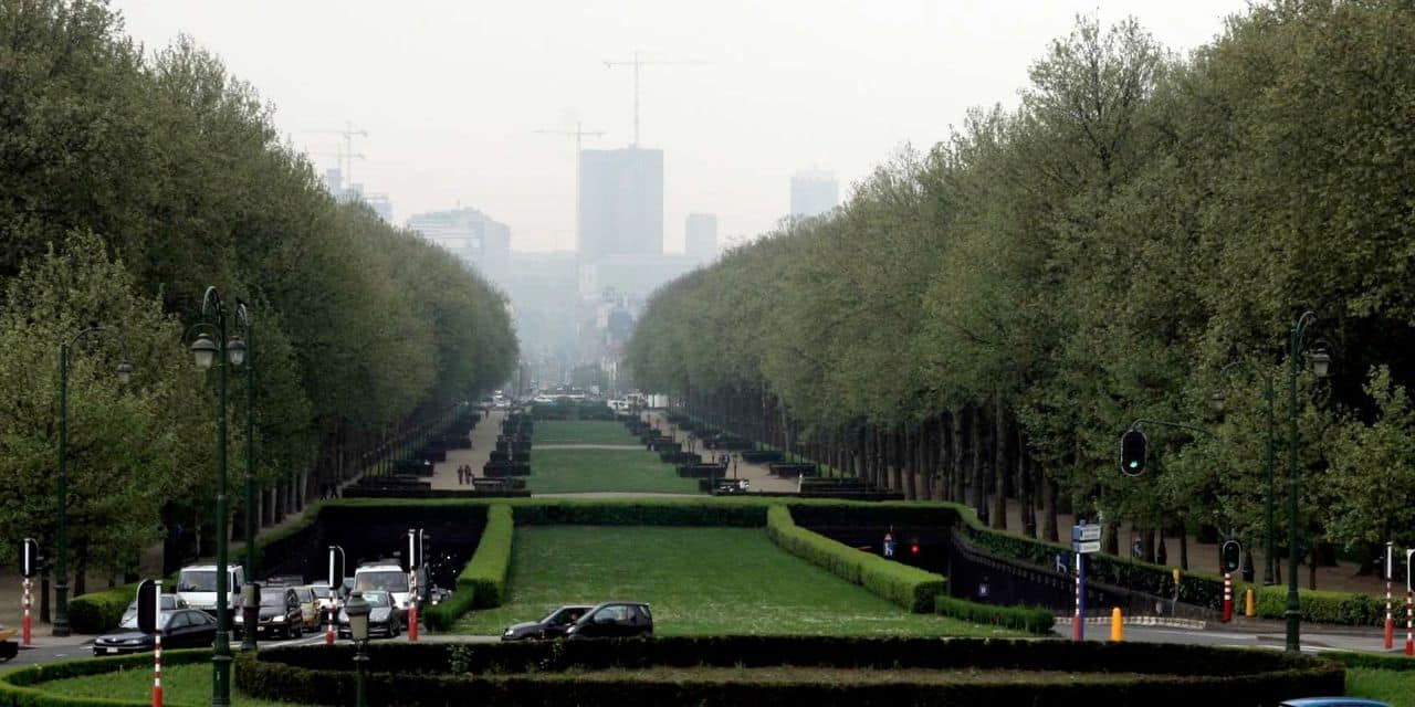 Abattage d'arbres : Koekelberg enjoint la Stib à revoir son projet