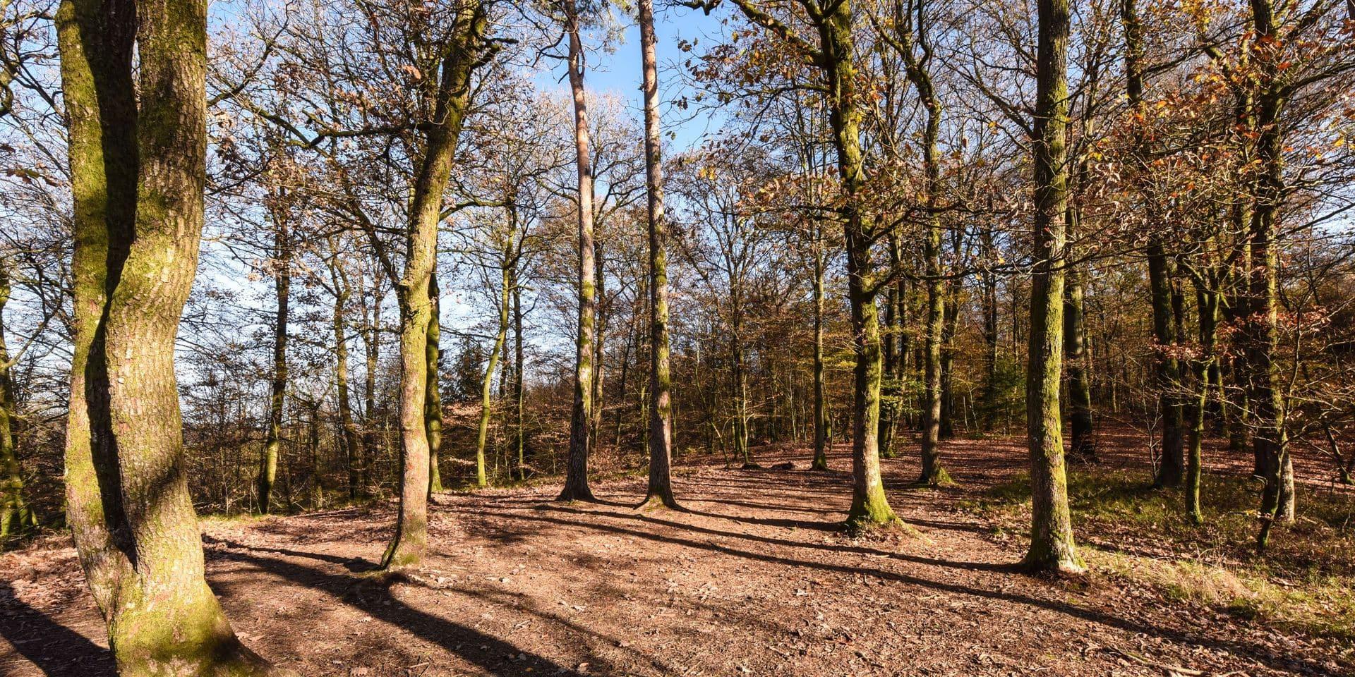 Ecaussinnes : La journée de l'arbre bat les records de la commune cette année