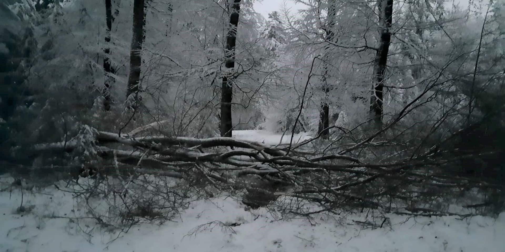 Neige : une petite dizaine d'interventions pour des arbres sur la chaussée