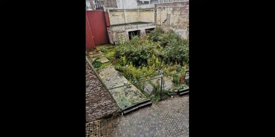 Liège : un accord trouvé pour le jardin collectif de la Porte-aux-Oies