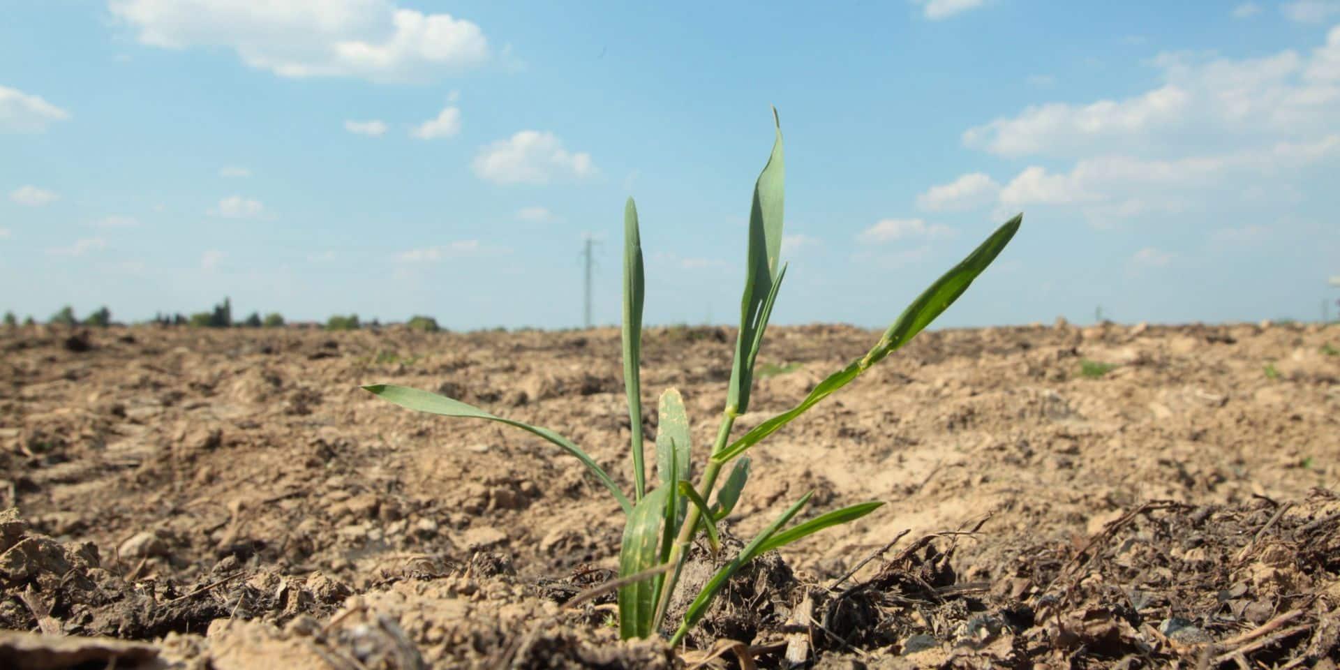Sécheresse : le mois de mai est le plus sec depuis 1833