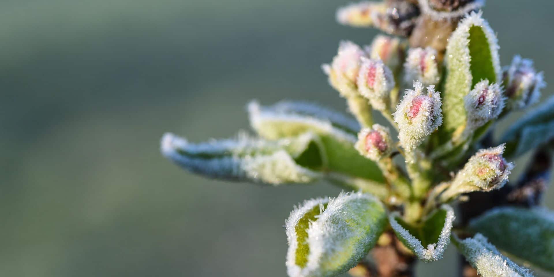 La formation botanique de Natagora s'invite à Liège