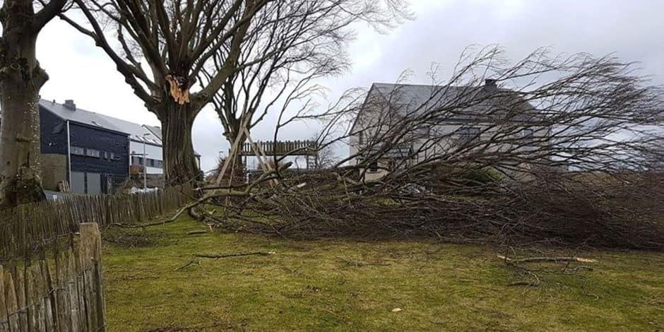 Victime de la tempête Ciara : faites-vous connaître !