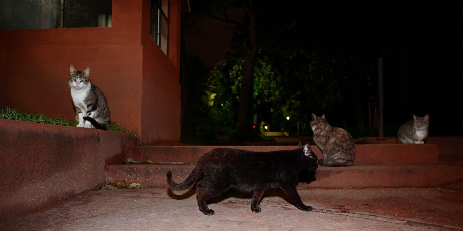 Péruwelz : Elles lancent une cagnotte pour les chats errants
