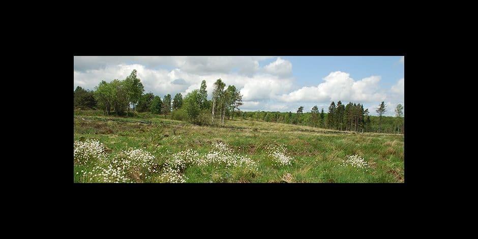 """Natagora : """"Le golf d'Arlon menace climat et biodiversité"""""""
