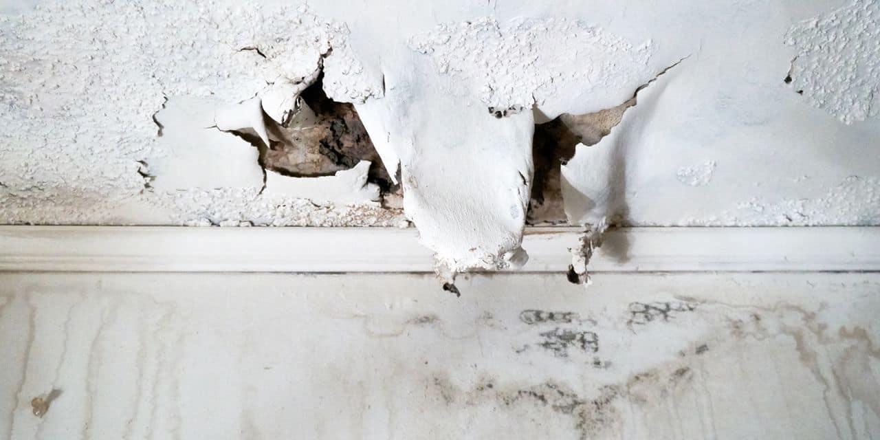 Humidité domestique : quels sont les signes avant-coureurs ?