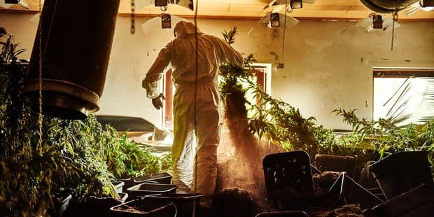 Genappe : près de 1.600 plants de cannabis cultivés dans un hangar - La DH