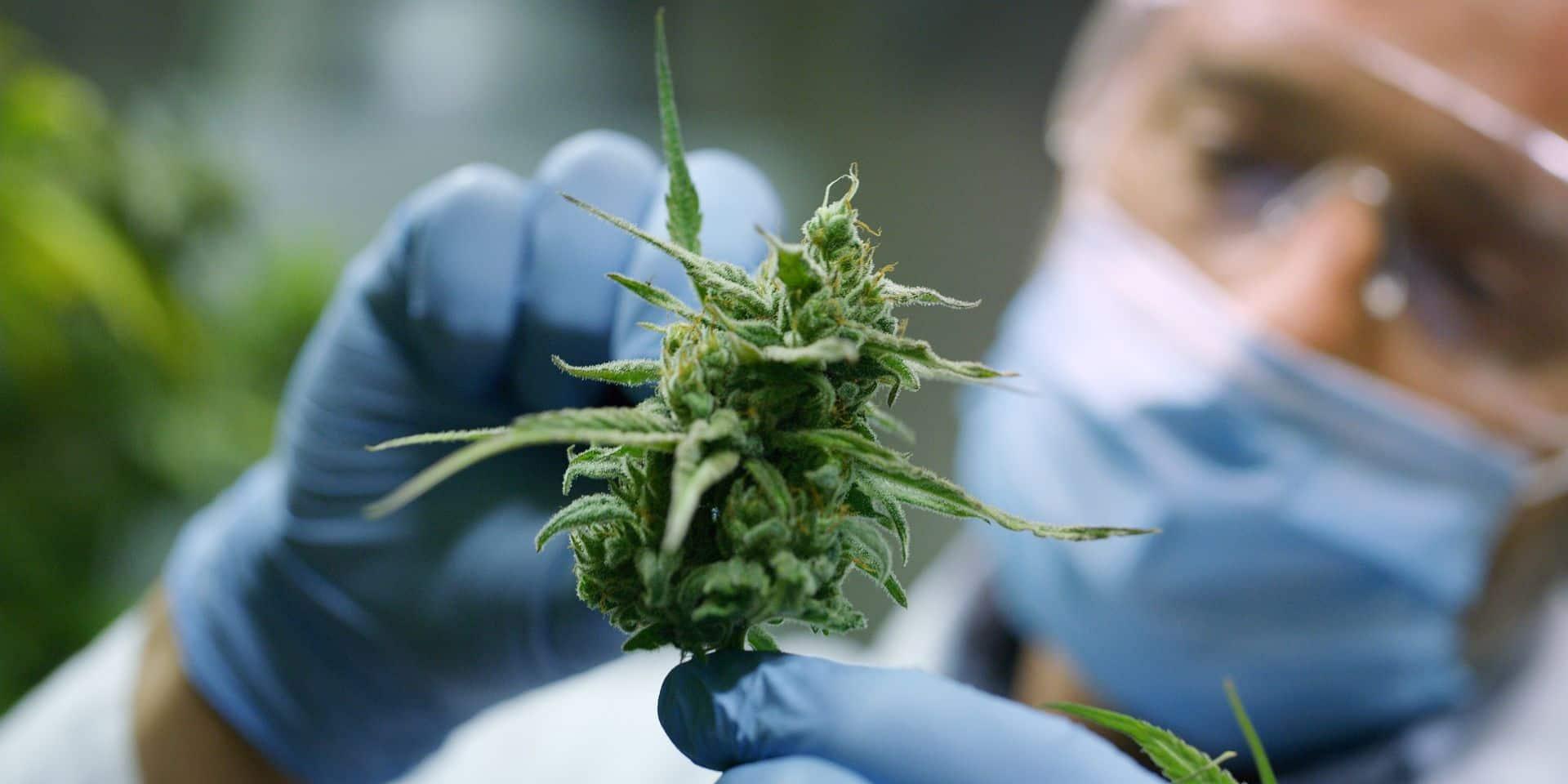 Un automobiliste arrêté avec 4kg de cannabis dans sa voiture