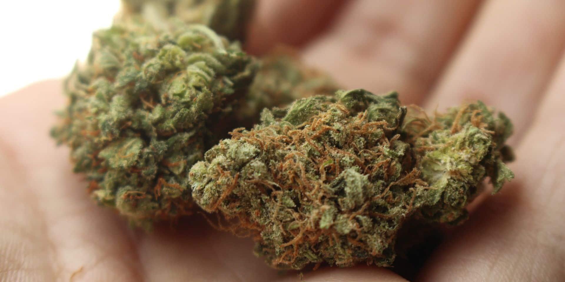 En route vers l'Angleterre, Ferhat débarque en Belgique et est chargé de surveiller une grosse plantation de cannabis
