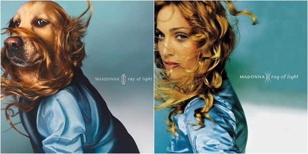Maxdonna : quand un photographe revisite les pochettes de Madonna avec son chien - La DH