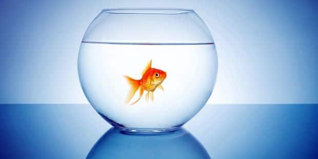 L'aquarium de Liège recueillera bientôt vos poissons rouges - La DH