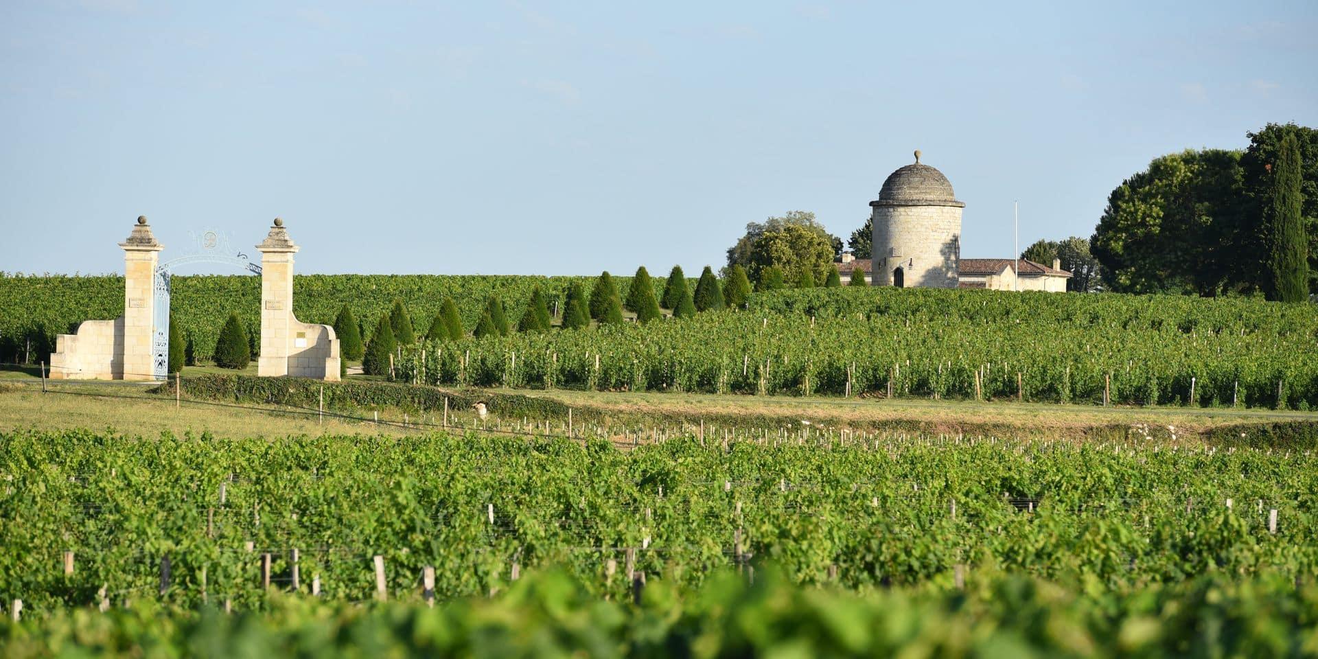 Nous avons goûté le millésime 2020 de Bordeaux: voici nos impressions