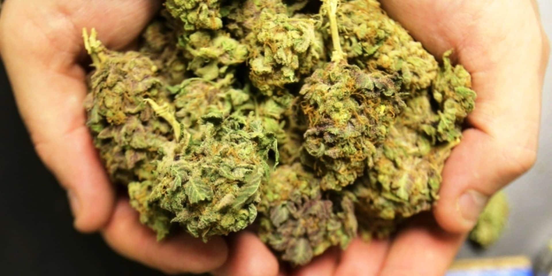 Saisie de 900 grammes de cannabis sur la E 411 : trois suspects privés de liberté