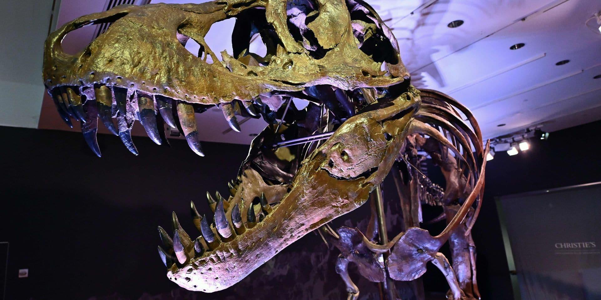 Suivre les Tyrannosaurus rex ? Les humains auraient pu le faire, sans transpirer