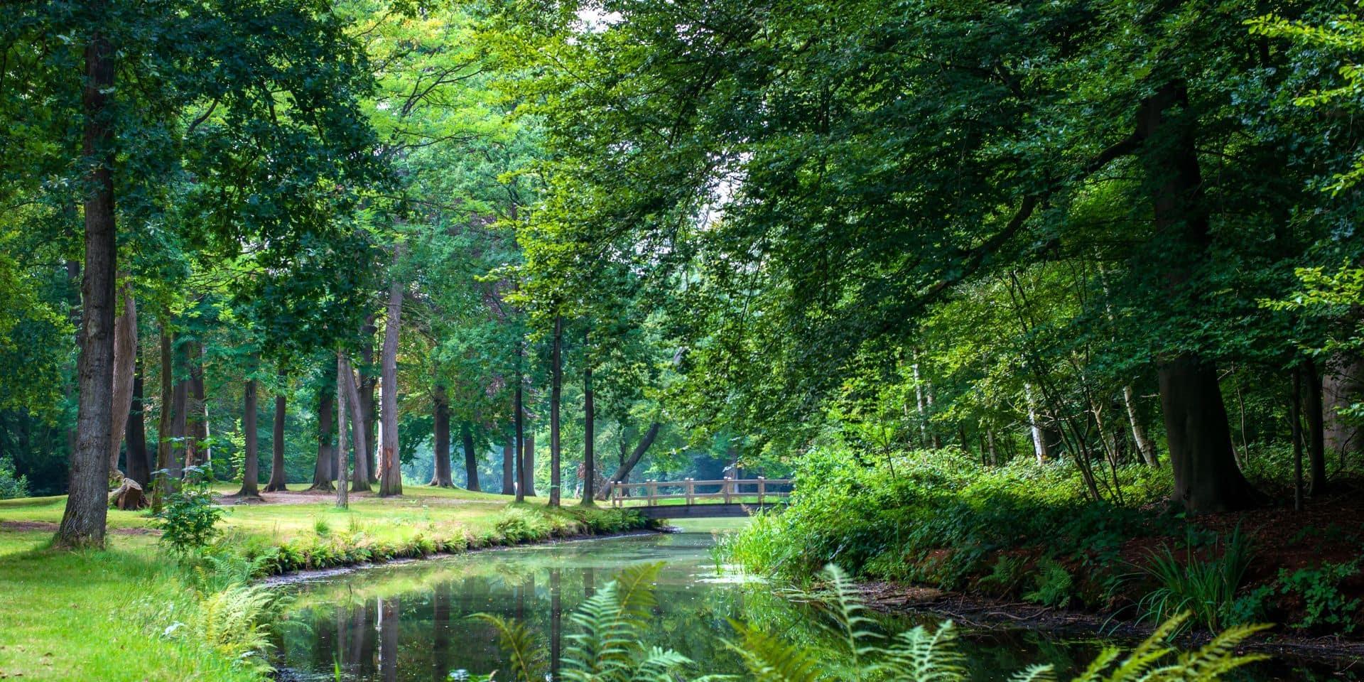 Pourquoi se promener dans la nature fait tellement de bien : la science nous l'explique