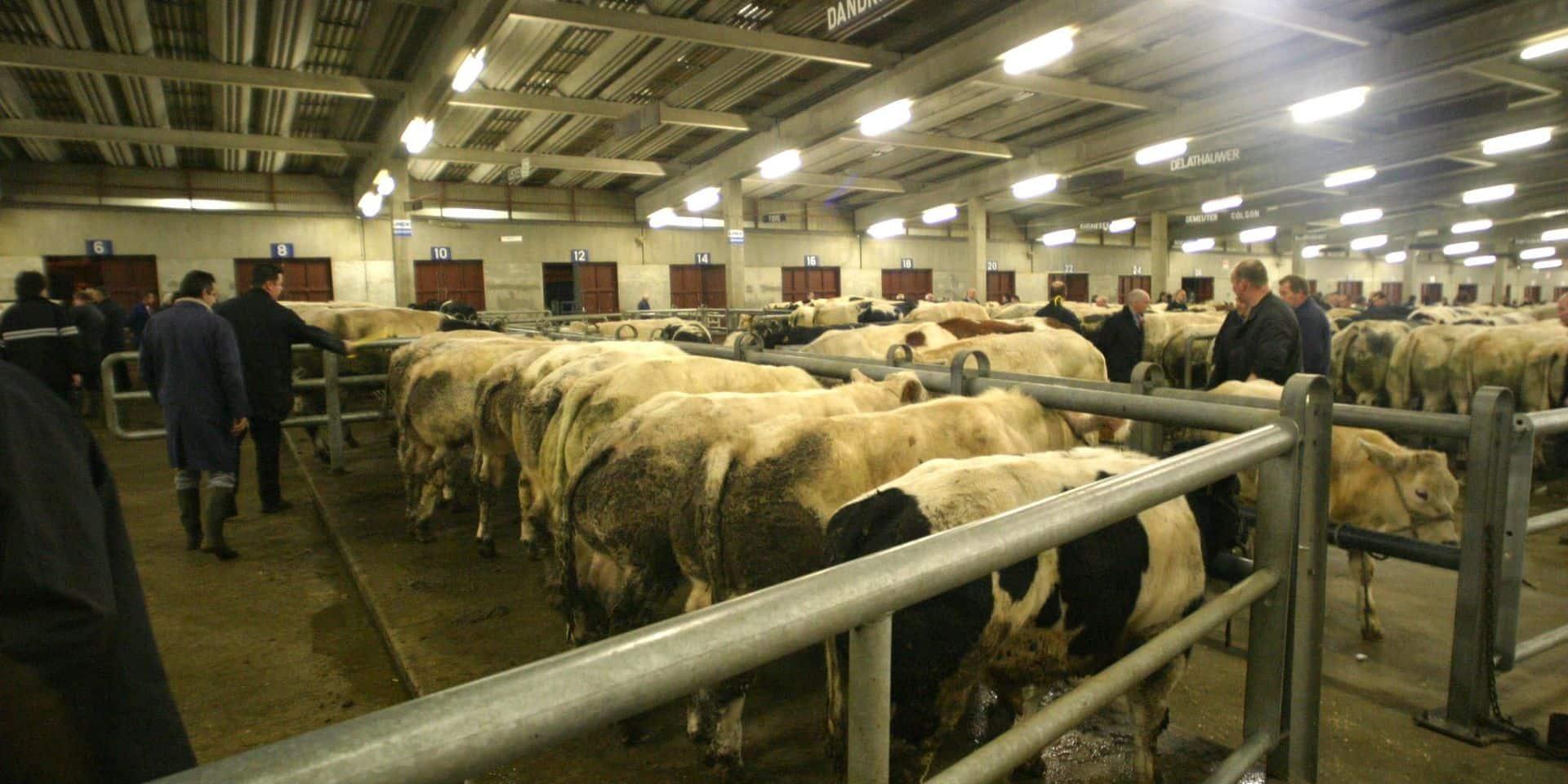 """""""La fermeture des marchés aux bestiaux serait une catastrophe pour le secteur"""", réagit la FWA après le rapport de Gaïa"""